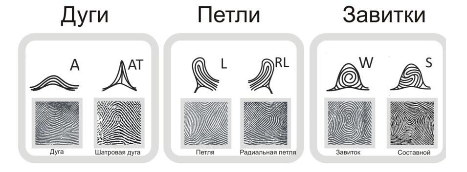 пальцевые узоры
